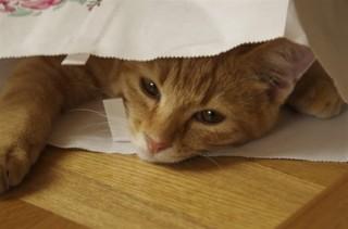 我輩はネコである...ドメインは、まだない